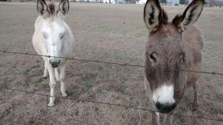 my-donkey-buddies